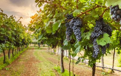Nova alíquota interna de ICMS para operações com vinhos no Paraná