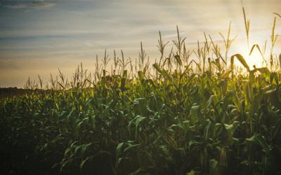 Redução das alíquotas de PIS/COFINS na importação do milho